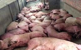 Việt Nam quyết tâm nghiên cứu, sản xuất vắc-xin phòng dịch tả lợn