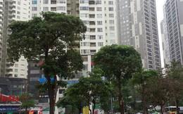 """""""Nhồi"""" thêm tòa nhà 18 tầng vào Khu đô thị Trung Hòa – Nhân Chính: Thủ tướng yêu cầu xử lý"""