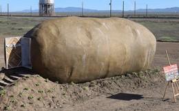 Củ khoai tây nặng 6 tấn gây sốt khi biến thành phòng Airbnb với giá 4,6 triệu/đêm
