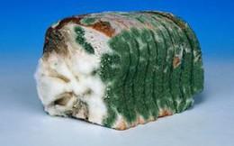 Clip: Có thật bánh mì bị mốc, cắt phần mốc đi là ăn được không? Câu trả lời sẽ khiến bạn phải bất ngờ