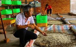 Lạ Đồng Tháp: Bán trứng ruồi 15 triệu/kg