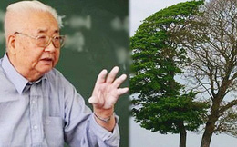 """Giáo sư tài chính hỏi sinh viên: """"Nếu là tiều phu, các cậu sẽ chặt cây nào?"""", ai cũng nhao nhao trả lời chỉ duy nhất 1 sinh viên đứng lên hỏi lại, đây chính là câu hỏi cần nhất để rèn bản lĩnh khôn ngoan"""