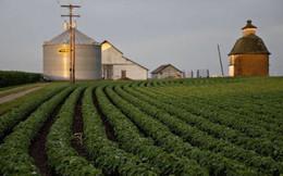 Nhiều nông dân Mỹ cố tình trục lợi tiền hỗ trợ chiến tranh thương mại của chính phủ