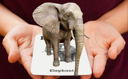 Ứng dụng xem hình 3D động vật sống động đang khiến cả trẻ em lẫn người lớn mê tít