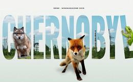 Từ địa ngục, Chernobyl nay trở thành thiên đường cho các loài động vật, có phải con người mới đáng sợ hơn cả hạt nhân?