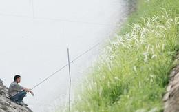 Sông Tô Lịch đổi màu sau khi làm sạch bằng công nghệ Nhật Bản: Hoa lau xanh mướt, người dân thư thả câu cá