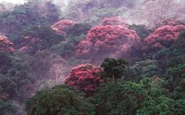 Mặt tốt của biến đổi khí hậu: thực vật đang phát triển nhanh đến bất ngờ?