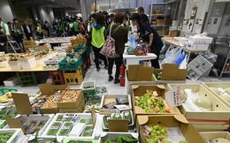 Nhật Bản có thể cấm các cửa hàng cung cấp túi nylon miễn phí