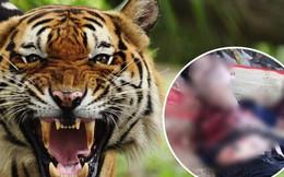 Bình Dương: Người đàn ông bị hổ cắn đứt lìa 2 tay trong khu du lịch sinh thái