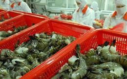Mỹ điều tra hành vi lẩn tránh thuế đối với sản phẩm tôm xuất khẩu của Thủy sản Minh Phú