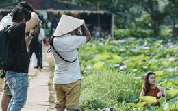 Đầm sen ở Nhật Tân có gì hot mà người dân Hà Nội ùn ùn kéo đến, lội xuống hồ chụp ảnh mỗi ngày?