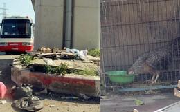Đường sắt Cát Linh – Hà Đông: Chân nhà ga ngập tràn rác thải hôi thối, trở thành nơi nuôi nhốt gà