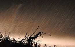"""""""Cơn mưa vàng"""" cứu những cánh rừng tại Hà Tĩnh"""
