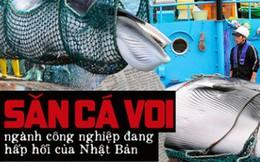 Sau 31 năm, Nhật Bản cho phép săn bắt cá voi thương mại trở lại: Bất chấp phản đối để nỗ lực hồi sinh ngành công nghiệp đang hấp hối?