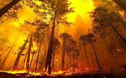 """Cánh rừng lớn thứ hai thế giới đang """"nhả"""" lượng CO2 tích trữ cả ngàn năm ra môi trường và nguyên nhân do phá rừng"""