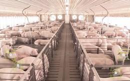 Sẽ mất ít nhất 1 thập kỷ Trung Quốc mới có thể phục hồi từ dịch tả lợn châu Phi