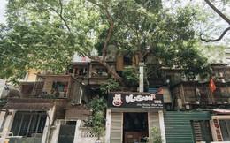 Kỳ lạ cây xanh mọc xuyên những căn nhà trong khu tập thể 60 năm tuổi ở Hà Nội