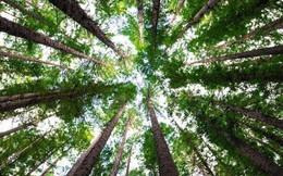Trái Đất vẫn còn chỗ cho 1 nghìn tỷ cây xanh, nếu trồng đủ chúng ta sẽ ngăn được biến đổi khí hậu