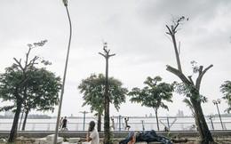 """Cận cảnh cuộc di cư của gần trăm cây hoa sữa từ hồ Tây ra bãi rác Nam Sơn để """"khử mùi"""""""