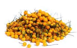 Tận mục loại ớt đắt nhất thế giới, hơn nửa tỷ đồng/kg