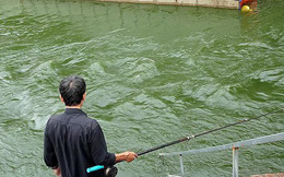 Nước sông Tô Lịch trong veo sau bão, cần thủ thỏa sức buông câu bắt cá