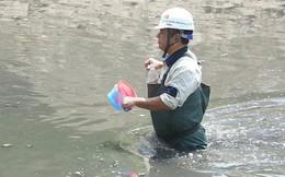 Chuyên gia Nhật sẽ tắm trên sông Tô Lịch