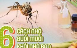 Dịch sốt xuất huyết lại bùng lên, đừng bỏ qua những cách đuổi muỗi đơn giản dễ áp dụng này để muỗi không có cơ hội hại bạn