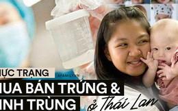 """Thị trường mua bán trứng và tinh trùng phi pháp ở Thái Lan: Người người """"săn giống"""" đẹp và thông minh giá nghìn đô của người mẫu và nam sinh y khoa"""