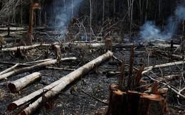 Cháy rừng Amazon là trường hợp khẩn cấp toàn cầu