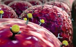 """Sống hòa hợp với bệnh ung thư là một """"khóa học bắt buộc"""": Mỗi người đều nên tham gia"""