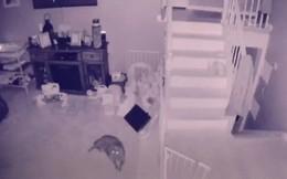 Mỹ: Camera an ninh bắt gặp cảnh 2 bóng ma chơi đùa với nhau