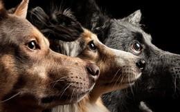 Sống với con người suốt 15.000 năm, não bộ loài chó đã bị chúng ta biến đổi