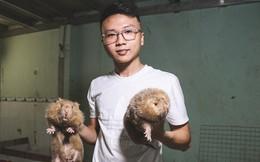 Chàng sinh viên Sài Gòn thu nhập 40 triệu đồng/tháng nhờ nuôi dúi bằng máy lạnh