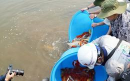 Chuyên gia Nhật thả cá Koi xuống sông Tô Lịch để chứng minh chất lượng nước sau khi xử lý