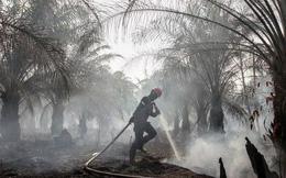 Cháy rừng khiến các nước Đông Nam Á chìm trong khói mù