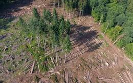 Gần 1/2 cây cối tại châu Âu sắp tuyệt chủng - nghiên cứu đáng báo động cho thấy tình hình biến đổi khí hậu đang ngày càng tệ hơn