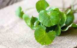 Công dụng tuyệt vời của cây rau má, giúp hạ men gan khi dùng thuốc điều trị ung thư mà không phải ai cũng biết