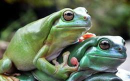 """Chuyện 3 con ếch """"cứu rỗi"""" người Do Thái từ đời này sang đời khác: Ai cũng nên đọc!"""