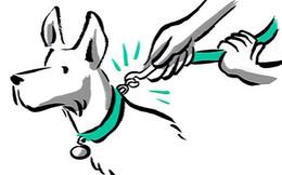 """Từ ngưỡng cửa của một điều vĩ đại, startup dắt chó đi dạo Wag đã """"tuột dây"""" và suy sụp như thế nào"""