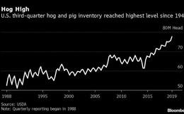 Mỹ đang 'ngồi trên núi thịt ba chỉ' lớn nhất 48 năm