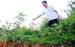 Dân bức xúc, tố cáo nhà máy thép Hòa Phát Dung Quất san ủi, xâm hại mồ mả