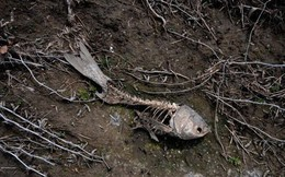 """Làn sóng tuyệt chủng """"nhân tạo"""": Con người đã hủy diệt một nửa sự sống trên Trái Đất"""
