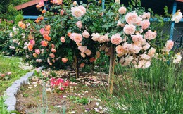"""Người đàn ông 57 tuổi vừa có sự nghiệp vừa tạo lập vườn rau xanh ở """"biệt thự"""" container tặng vợ ở giữa Thủ đô"""