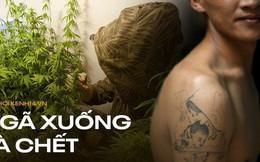Lời thú nhận của gã đàn ông Việt sang Anh trồng cần sa: Hành trình bám gầm xe tải đến những ngày tháng chui nhủi, vào tù ra tội