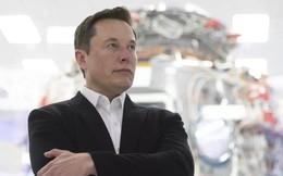 Dù đang hết tiền, Elon Musk vẫn chi ra 1 triệu USD để ủng hộ quỹ trồng cây của MrBeast