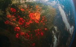 """11.000 nhà khoa học cùng nhau báo động về tình trạng khí hậu Trái đất: Khẩn cấp, nếu không sớm thay đổi thì cả nhân loại sẽ gặp """"những thảm họa không thể dự đoán"""""""