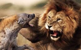 """Từ câu chuyện sư tử dạy con """"Hãy đối đầu với hổ báo nhưng tránh xa lũ chó điên"""" và bài học: Đừng tốn thời gian dây dưa với những kẻ vô lý!"""