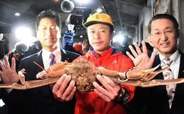 Cua tuyết được bán với giá kỷ lục gần 50.000 USD ở Nhật