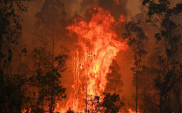 Cháy rừng Australia khủng khiếp hơn, 6 triệu người trong tình trạng khẩn cấp