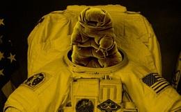 Cấy DNA của gấu nước cho các phi hành gia sẽ giúp họ sống được trên Sao Hỏa?